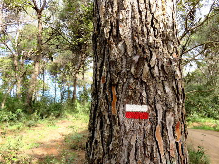 GR red and white marking to help you navigate the trail